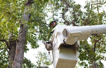 Picture of our crew member in a white bucket truck starting to trim a large tree in Pawtucket, RI